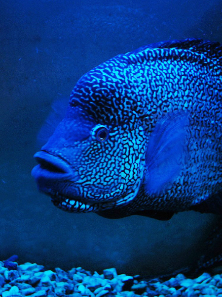 The 15 most beautiful aquarium fish in the world
